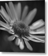 Sunny Daisy Black And White 2 Metal Print