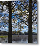 Sunny Day On The Pond Metal Print