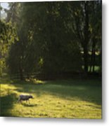 Sunny Evening Metal Print