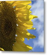 Sunny Faces And Blue Skies Metal Print