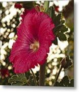 Sunny Garden Mayflower Metal Print