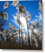 Sunny Marsh Beauty Metal Print