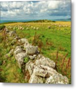 Sunny Meadow Sheep Metal Print