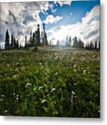 Sunny Meadows  Metal Print