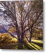 Sunny Mono Tree Metal Print