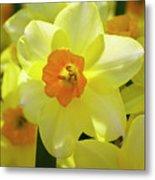 Sunny Narcissus Metal Print