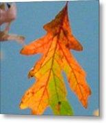 Sunny Oak Leaf Metal Print