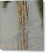 Sunny Reeds Reflect Metal Print