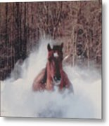 Sunny Running For The Barn. Metal Print