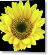 Sunny Sunflower Black Yellow Metal Print