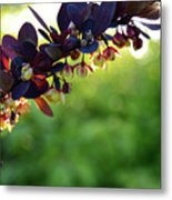 Sunrays With Blooms Metal Print
