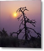 Sunrise And Fog Metal Print
