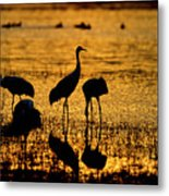 Sunrise At The Crane Pools Metal Print