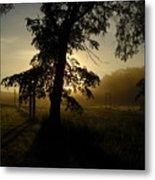 Sunrise Behind Elm Tree Metal Print
