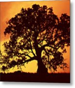 Sunrise Gum Metal Print