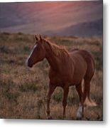 Sunrise Horse Metal Print