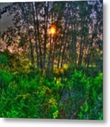 Sunrise In The Swamp-4 Metal Print