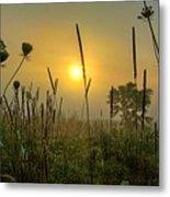 Sunrise In The Swamp Metal Print