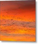 Sunrise Migration Metal Print