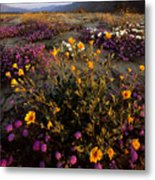 Sunrise On Desert Wildflowers Metal Print