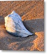 Sunrise Seashell Metal Print