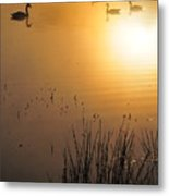 Sunrise Swim Metal Print