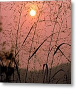 Sunrise Through The Tall Grass Metal Print