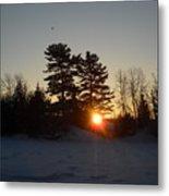 Sunrise Under Pine Tree Metal Print