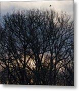 Sunrise With Bird Metal Print