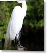 Sunrise With The Egret  Metal Print