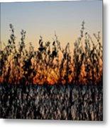 Sunrise2 Metal Print