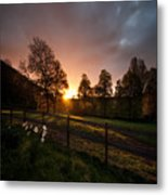 Sunset And Daffodils Metal Print