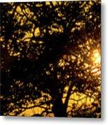 Sunset And Trees - San Salvador I Metal Print