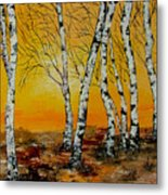 Sunset Birches Metal Print