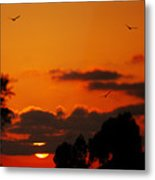 Sunset Birds Metal Print