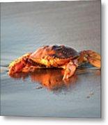 Sunset Crab Metal Print
