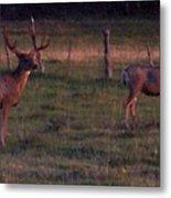 Sunset Deer II Metal Print