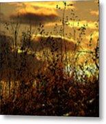 Sunset Grasses Metal Print