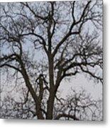 Sunset Hickory Tree Metal Print