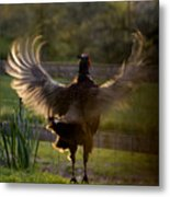 Sunset In His Wings Metal Print