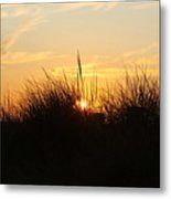 Sunset In The Grass Metal Print