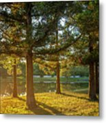Sunset In The Park Metal Print