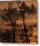 Sunset In The Pine Woods Metal Print