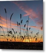 Sunset In The Weeds Metal Print