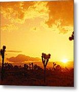 Sunset, Joshua Tree Park, California Metal Print