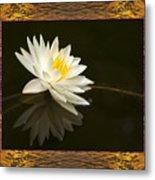 Sunset Lily Metal Print
