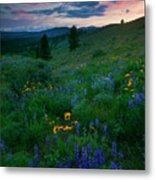 Sunset Meadow Trail Metal Print