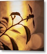 Sunset Of An Ant Metal Print