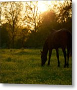 Sunset Over A Spring Meadow Metal Print