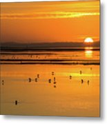 Sunset Over Arcata Marsh, With Avocets Metal Print